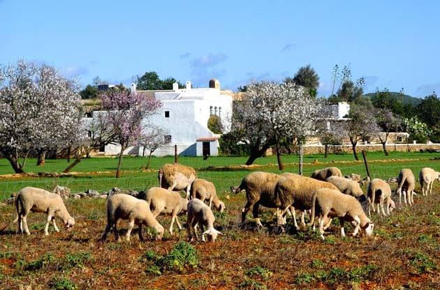 Familie rondreis Ibiza - Vivencia Travel (5)