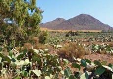 Natuur rondreis Andalusië - Vivencia Travel (18)